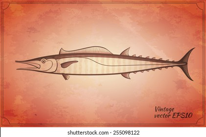 wahoo fish vintage vector illustration