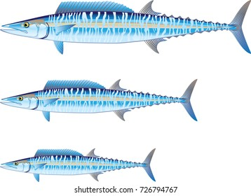 Wahoo game fish Vector illustration