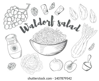 Waldorf Salad. Hand drawn sketch. Organic food. Vector illustration on white background