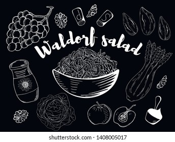 Waldorf Salad. Hand drawn sketch. Organic food. Vector illustration on black background