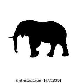 Walking big elephant strong power with outline black and silhouette Thailand