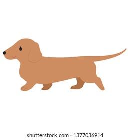 walking brown Dachshund