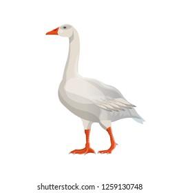 Walking white goose. Vector illustration isolated on white background