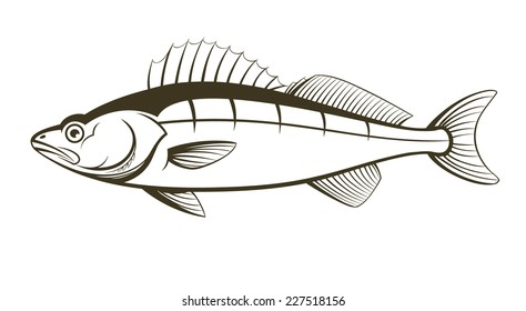 walleye fish outline engraving vector illustration
