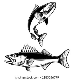 Walleye fish sign on white background. Zander fishing. Design element for logo, label, emblem, sign. Vector illustration
