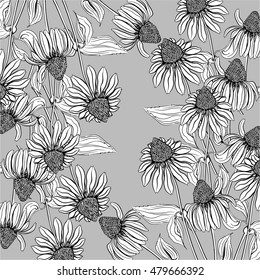 Wallpaper of the contours of echinacea flowers on a gray background. Vector illustration