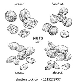 Walnut, peanut, hazelnut, almond. Hand drawn set with nuts. Vector illustration isolated on white background. Doodle healthy food illustrations