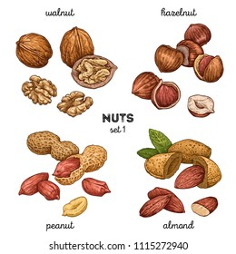 Walnut, peanut, hazelnut, almond. Hand drawn set with nuts. Colored vector illustration isolated on white background. Doodle healthy food illustrations
