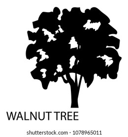 Walnut tree icon. Simple illustration of walnut tree vector icon for web