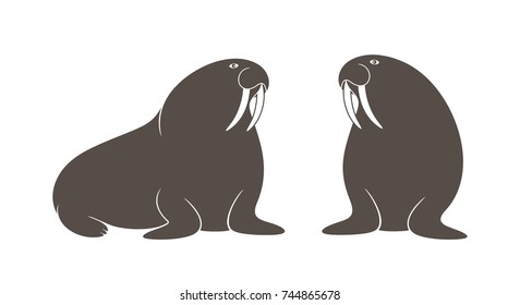 Walrus set. Isolated walrus on white background