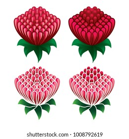 Waratah flower icon set on white background  - Waratah is the state floral emblem of New South Wales - Telopea speciosissima