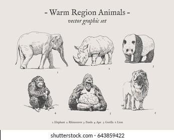 Warm region animals drawings set on grey background with elephant, rhino, panda, ape, gorilla, lion