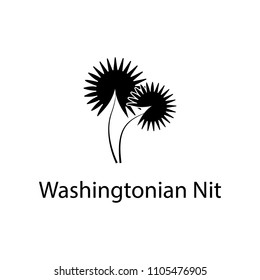Washingtonian nit illustration. Element of plant icon for mobile concept and web apps. Detailed Washingtonian nit illustration can be used for web and mobile on white background