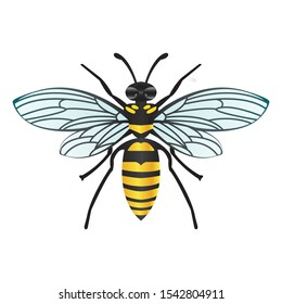 wasp or bee with black and yellow. photo of honey-producing animals with isolated white background.