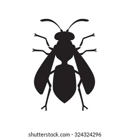 Wasp Bee Hornet vector illustration - set of household pests in pure style