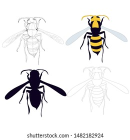 wasp, bee, on a white background, with sketch and silhouette