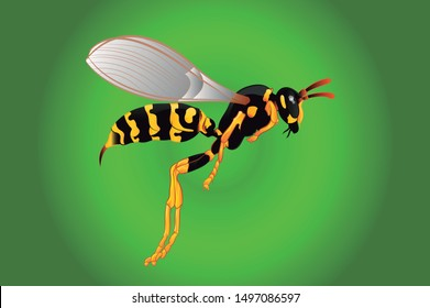 Wasp with bright and gradient colors, shadows and lights marked in the design, gradient green background