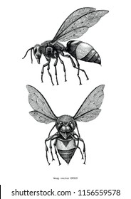 Wasp hand draw vintage clip art isolated on white background