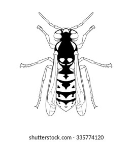 Wasp. Sketch of Wasp. Wasp isolated on white background. Wasp Design for coloring book.  hand-drawn Wasp. Vector illustration