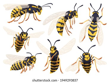Wasp vector cartoon icon set . Collection vector illustration yellow wasp on white background. Isolated cartoon icon set bee and hornet for web design.