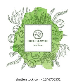 Watecolor background with edible seaweed: laminaria seaweed, macrocystis, chlorella seaweed and fucus. Brown algae. Vector hand drawn illustration.