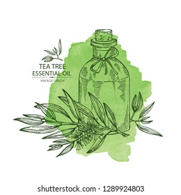 Watecolor background with tea tree and bottle of essential oil. Cosmetic, perfumery and medical plant. Vector hand drawn illustration