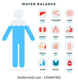 Water balance, icons set. Human balance of water. Healthy lifestyle concept. Human organs, liver, kidneys, lungs, intestines, brain, stomach, muscle, skin, bones, blood. Vector illustration.
