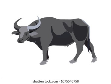 Water buffalo. Side view. Vector illustration on the white