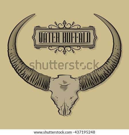 Water Buffalo Skull Cranium Bull Horns Stock Vector (Royalty Free ...