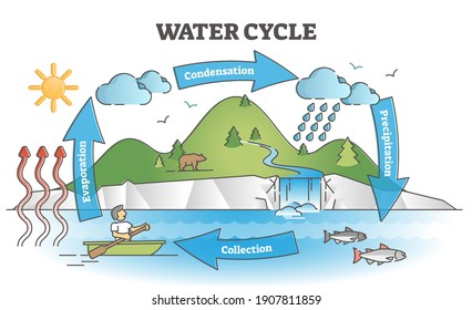 Water cycle diagram with simple rain circulation explanation outline concept. Educational biology climate scheme with precipitation, evaporation, condensation and collection phases vector illustration