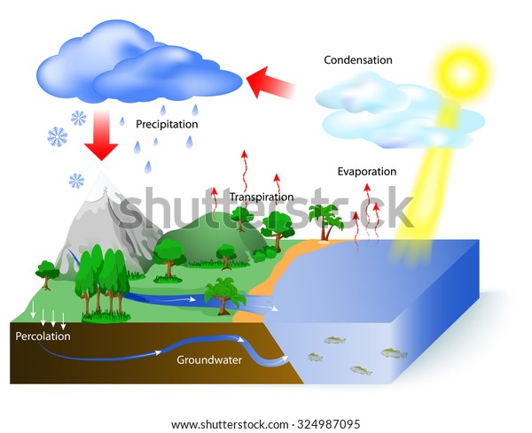 water cycle diagram sun which drives stock vector (royalty bicycle diagram labeled the water cycle diagram labeled #10