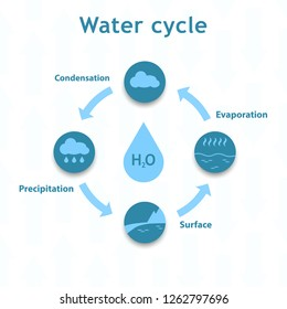 Water cycle infographics. The water cycle vector diagram