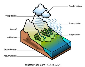 The water cycle showing evaporation, transpiration, condensation, precipitation, run off, infiltration, ground water and accumulation.