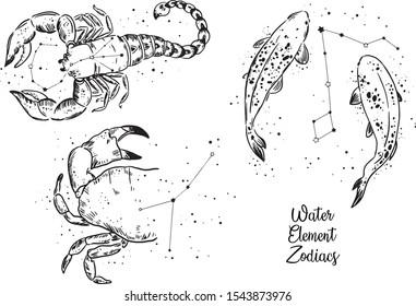 Zodiac-Zeichen des Wasserelements. Krebs Zodiac, Fische Zodiac, Scorpio Zodiac. Schwarz-Weiß-Arbeiten.