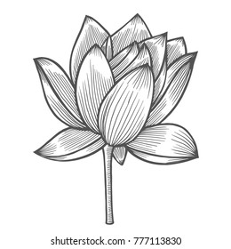 Water Lily flower illustration, line pattern. Vector artwork. Coloring book page for adult. Love bohemia concept for wedding invitation card, ticket, branding, boutique logo, label.