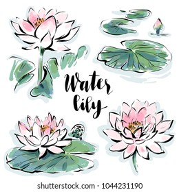 Water lily flowers isolated vector set drawn in watercolor style for greeting card design, Chinese botanical illustration, nature banner.