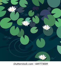 Water lily, lotus water flower and leaves in pond background