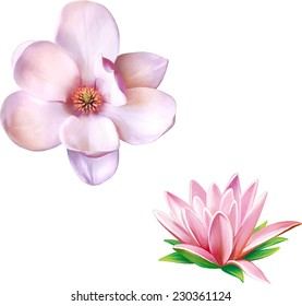 Water lily (lotus) flower. Vector illustration of magnolia flower isolated on white background