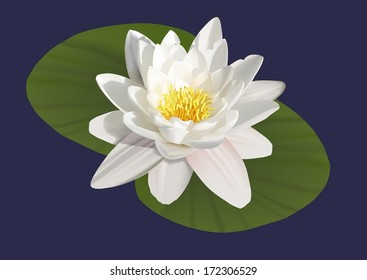 water lily on a blue background, Vector illustration