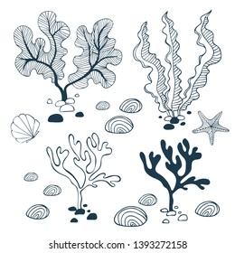 Water plants, stones, starfish and seashell. Collection of hand drawn elements isolated on white background