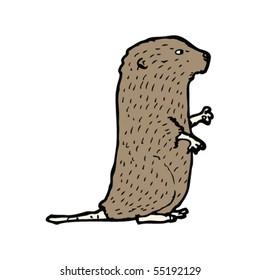 water vole illustration