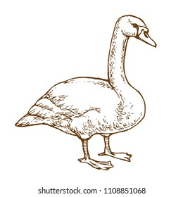 Waterbird goose hand drawn line art stock vector illustration for coloring book page isolated on white background