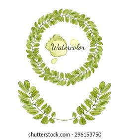 Watercolor acacia leaves decoration. Round frame isolated. Hand drawn vector wreath