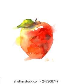 Watercolor apple. Vector illustration.