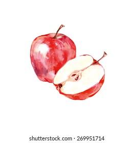 Watercolor apples. Vector illustration