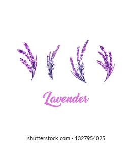 Watercolor or Aquarelle Paintings of Vector Lavender. Set of Isolated Watercolour Lavandula or Hand Drawn Tea Herbs Flower. Summer Blossom or Foliage of Garden Plant in Aquarelle. Provence Perfume.