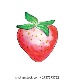 Watercolor aquarelle red strawberry with green leaves. Vector. Colorful berry