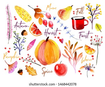 Watercolor autumn banner. Vector hand drawn plants, vegetables, and symbols of fall. Pumpkin, maple leaf, guelder rose, blueberry, apple, pear, corn, acorns, abstract branches. Forest seasonal image.