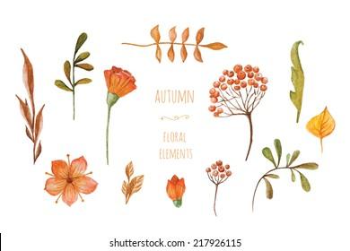 watercolor autumn floral elements. hand-drawn set