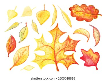 Watercolor autumn leaves or foliage silhouettes isolated on white background. Hand drawn water color vector fall tree leaf shapes with maple, oak, birch and other nordic leave